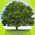 arbre-bulle-ecolo-03.png
